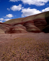 Painted Hills 252